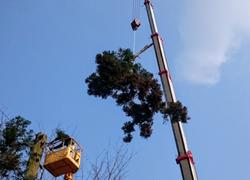 高木剪定・伐採