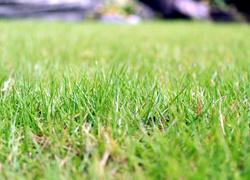 芝刈り 草刈