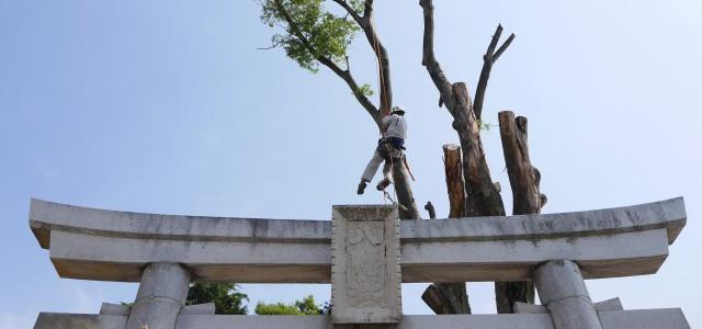 高木伐採 神社